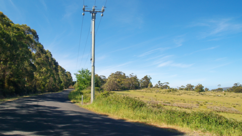 Ausgrid conducts vegetation inspections