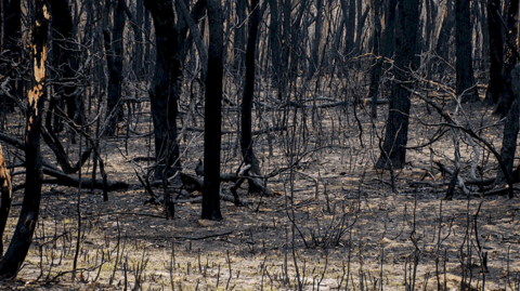 Rebuilding sustainably after the bushfires